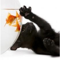 Tapet autocolant -Pisica si pestisor 1 - 152X150cm